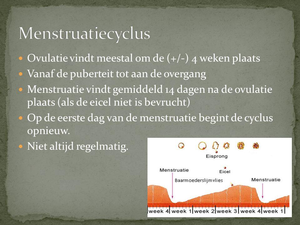 Menstruatiecyclus Ovulatie vindt meestal om de (+/-) 4 weken plaats