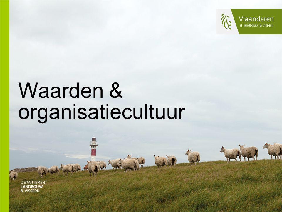 Waarden & organisatiecultuur