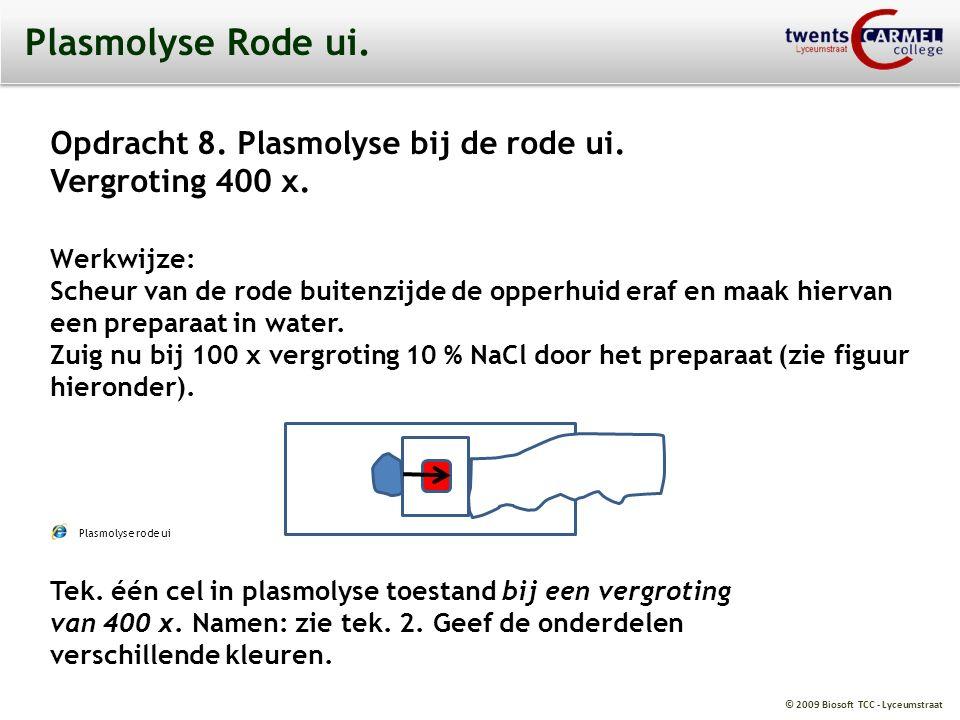 Plasmolyse Rode ui. Opdracht 8. Plasmolyse bij de rode ui.