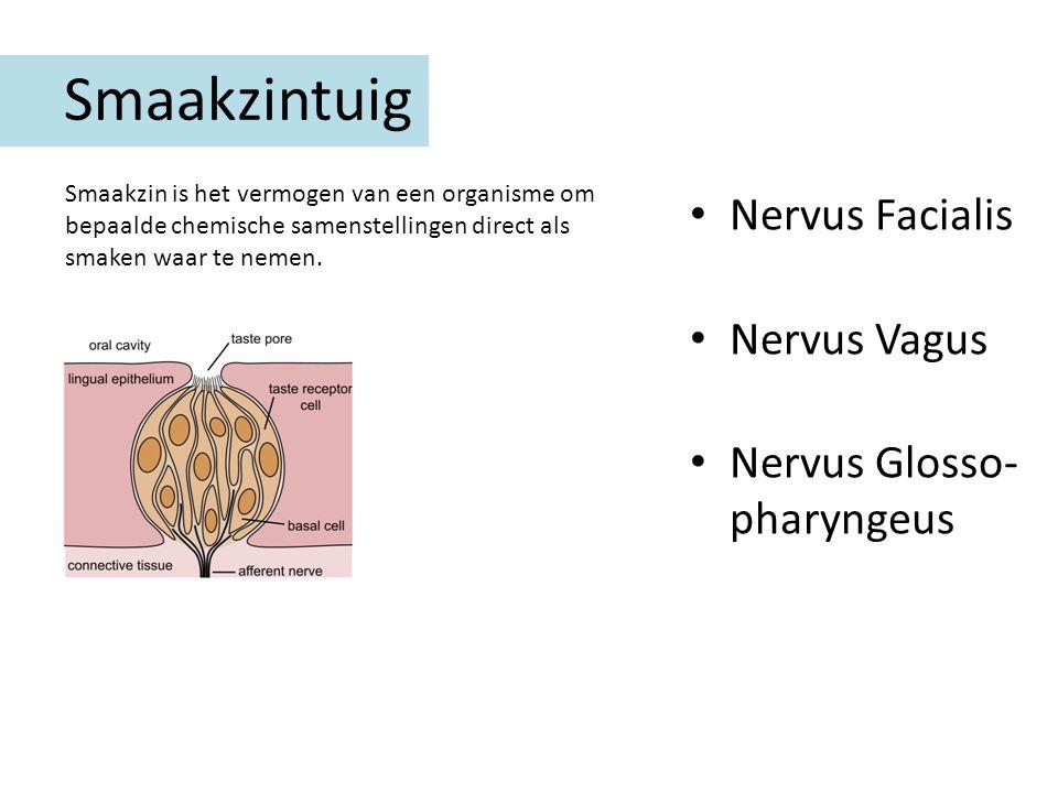 Smaakzintuig Nervus Facialis Nervus Vagus Nervus Glosso-pharyngeus