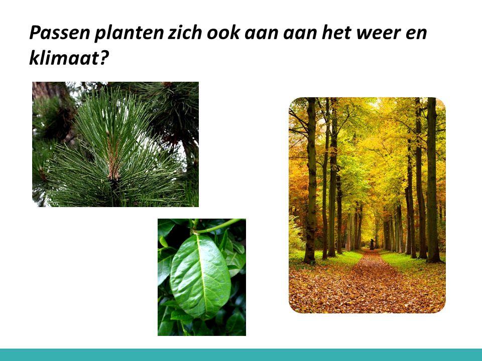 Passen planten zich ook aan aan het weer en klimaat