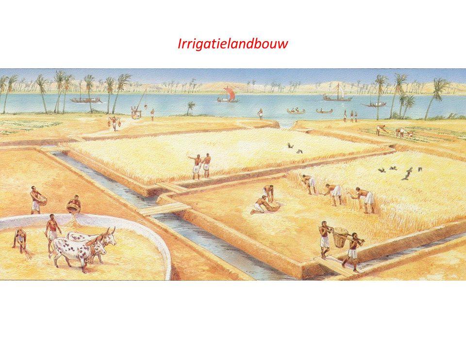 Irrigatielandbouw