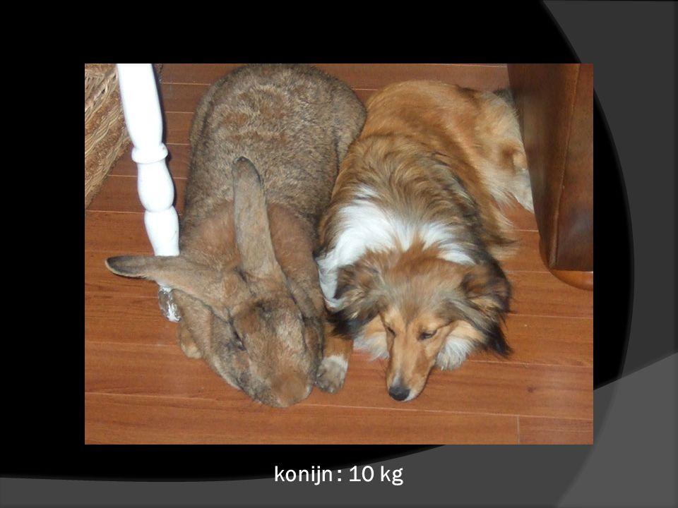 konijn : 10 kg