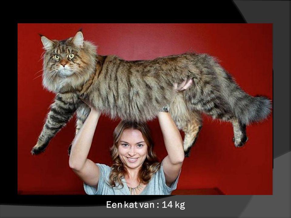 Een kat van : 14 kg