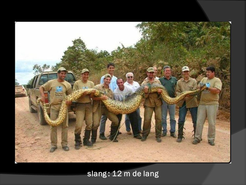 slang : 12 m de lang