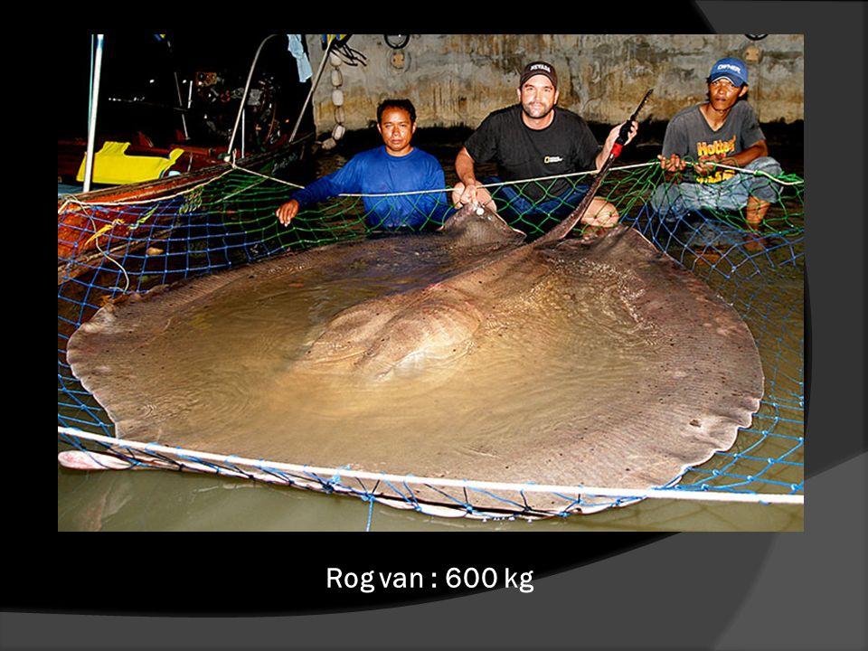 Rog van : 600 kg