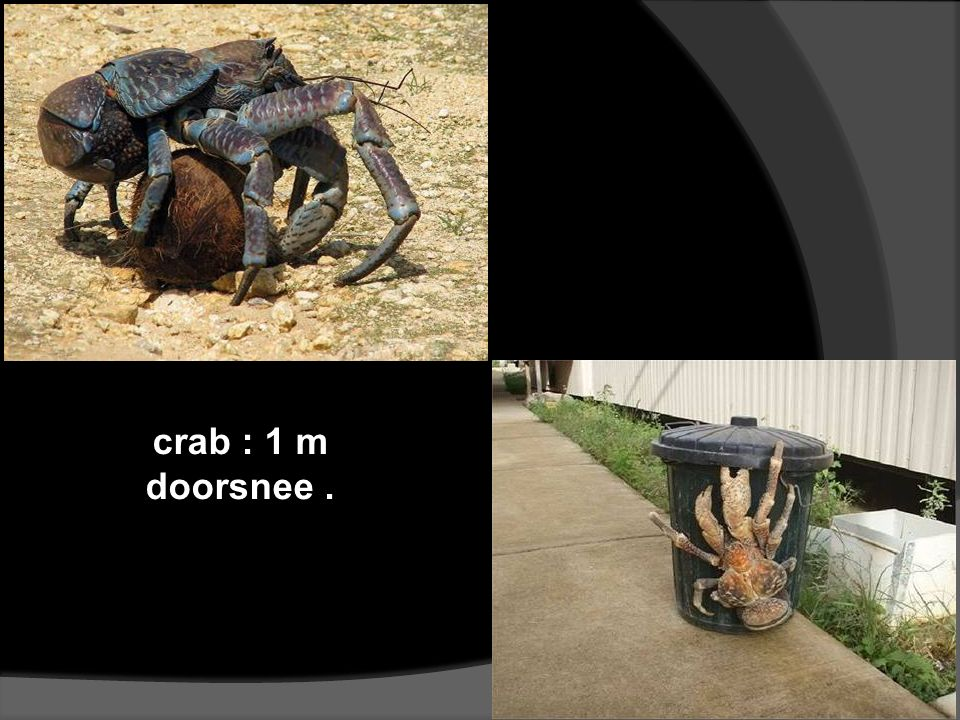 crab : 1 m doorsnee .