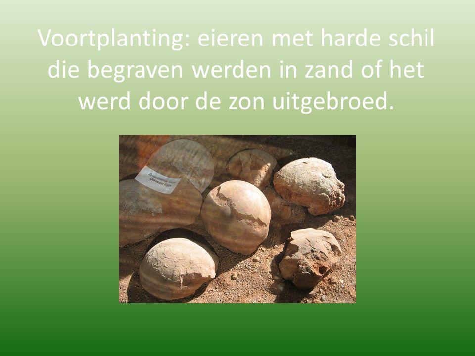 Voortplanting: eieren met harde schil die begraven werden in zand of het werd door de zon uitgebroed.