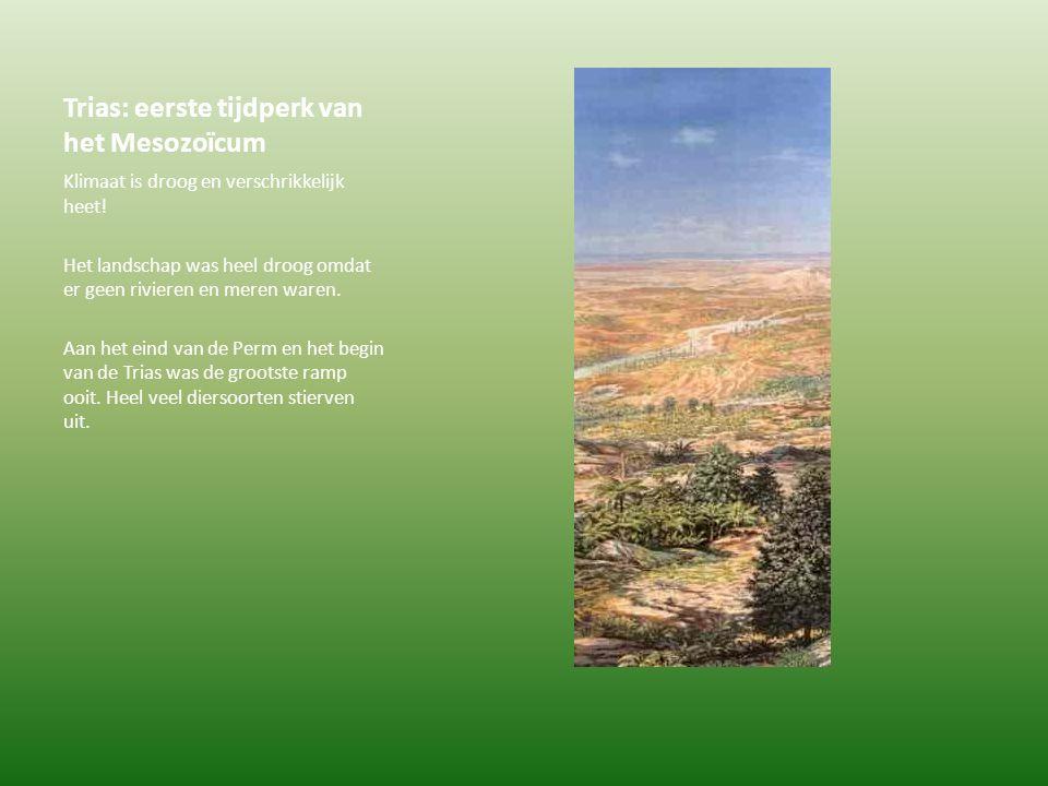 Trias: eerste tijdperk van het Mesozoïcum