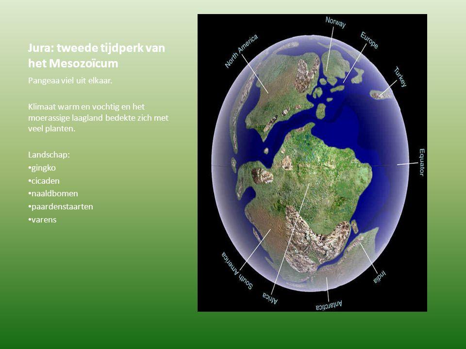 Jura: tweede tijdperk van het Mesozoïcum
