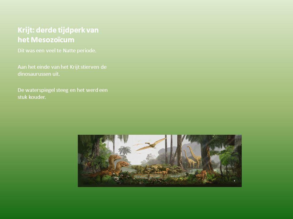 Krijt: derde tijdperk van het Mesozoïcum