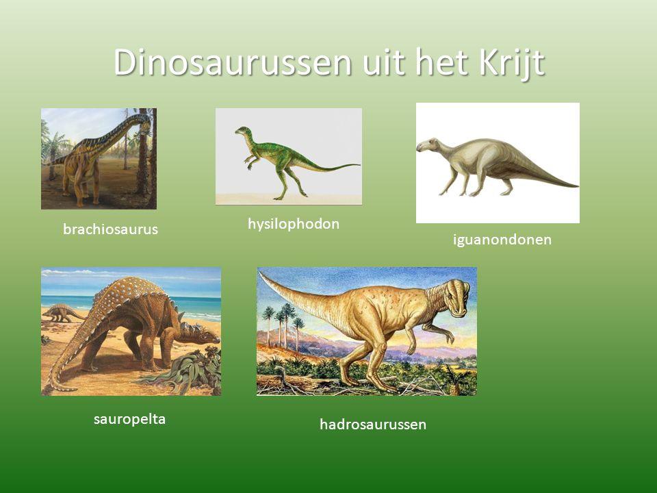 Dinosaurussen uit het Krijt