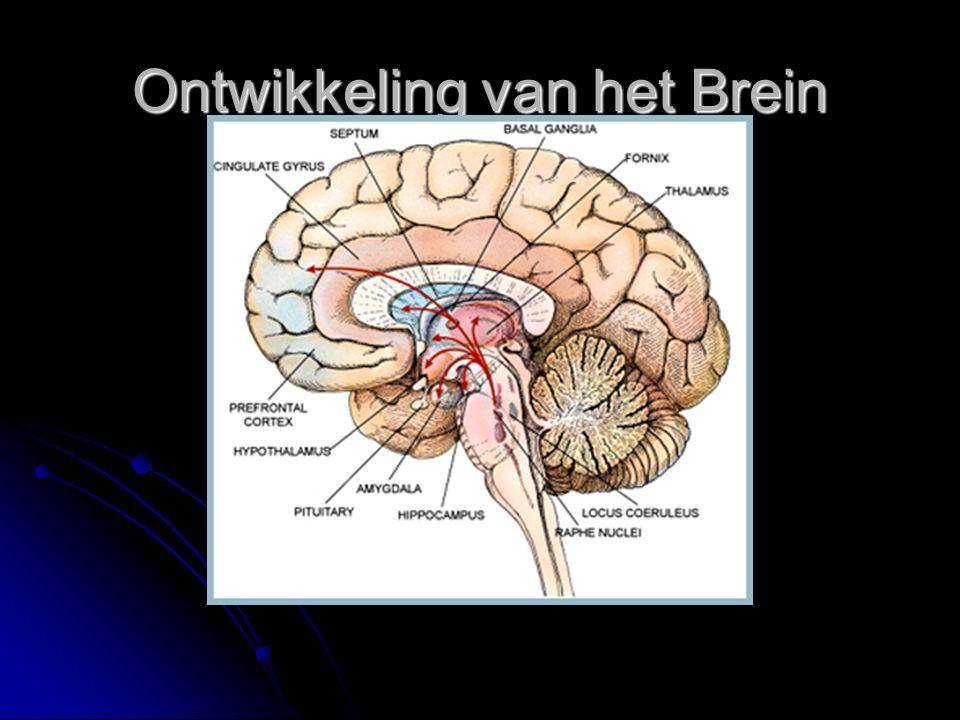 Ontwikkeling van het Brein