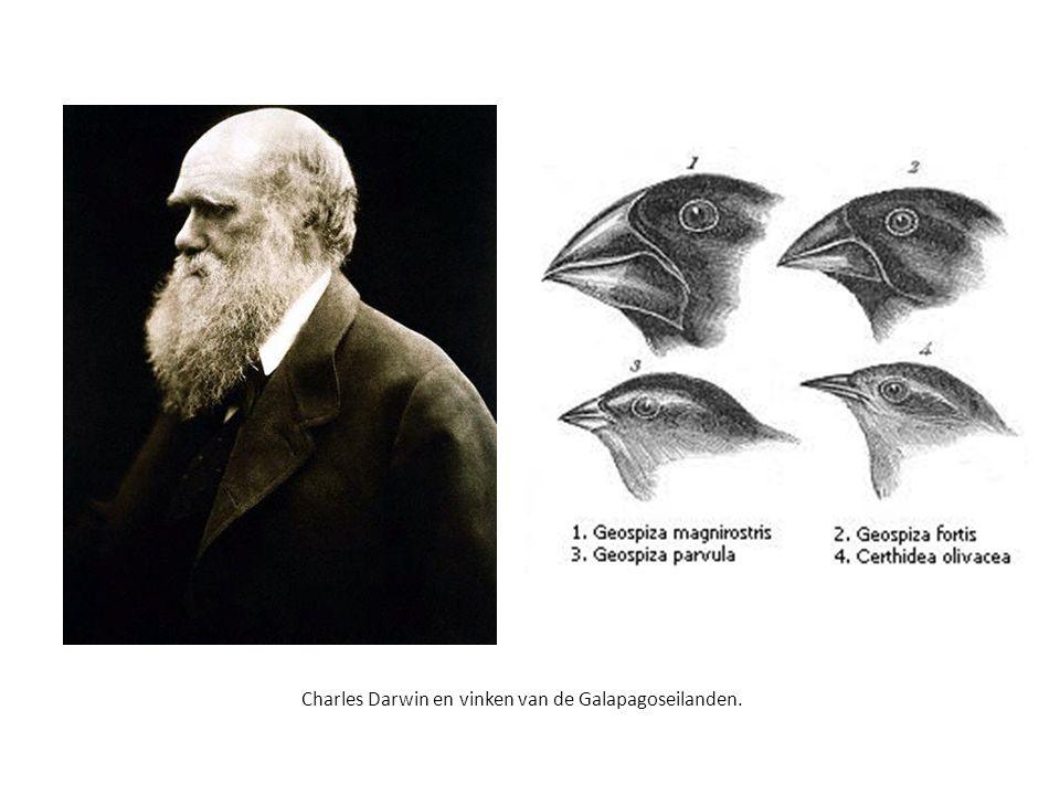 Charles Darwin en vinken van de Galapagoseilanden.