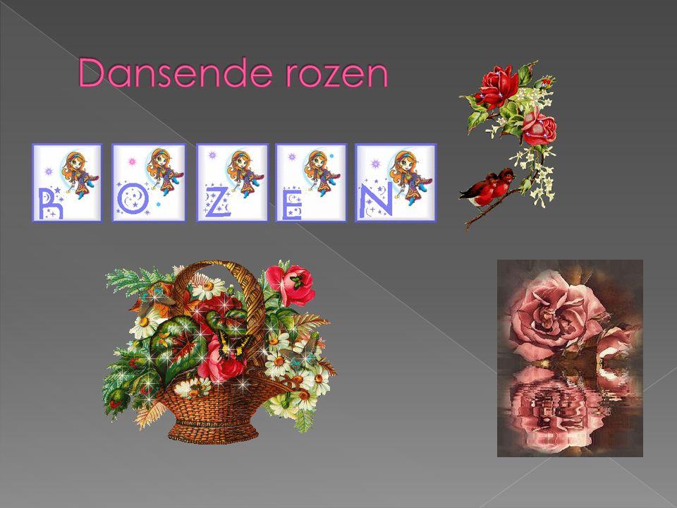 Dansende rozen