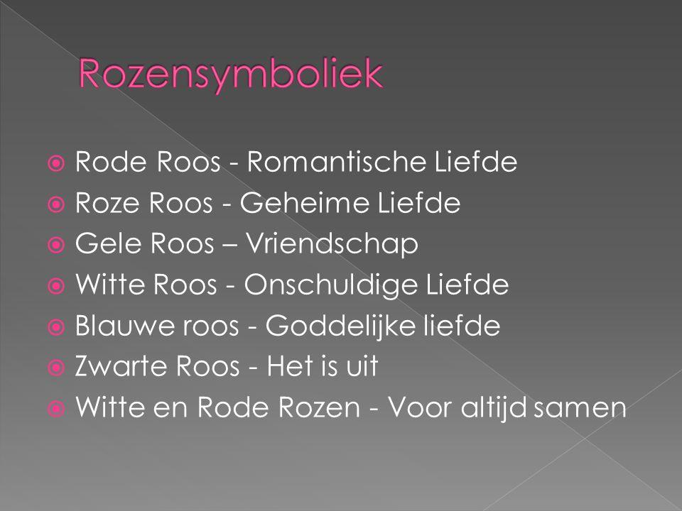 Rozensymboliek Rode Roos - Romantische Liefde