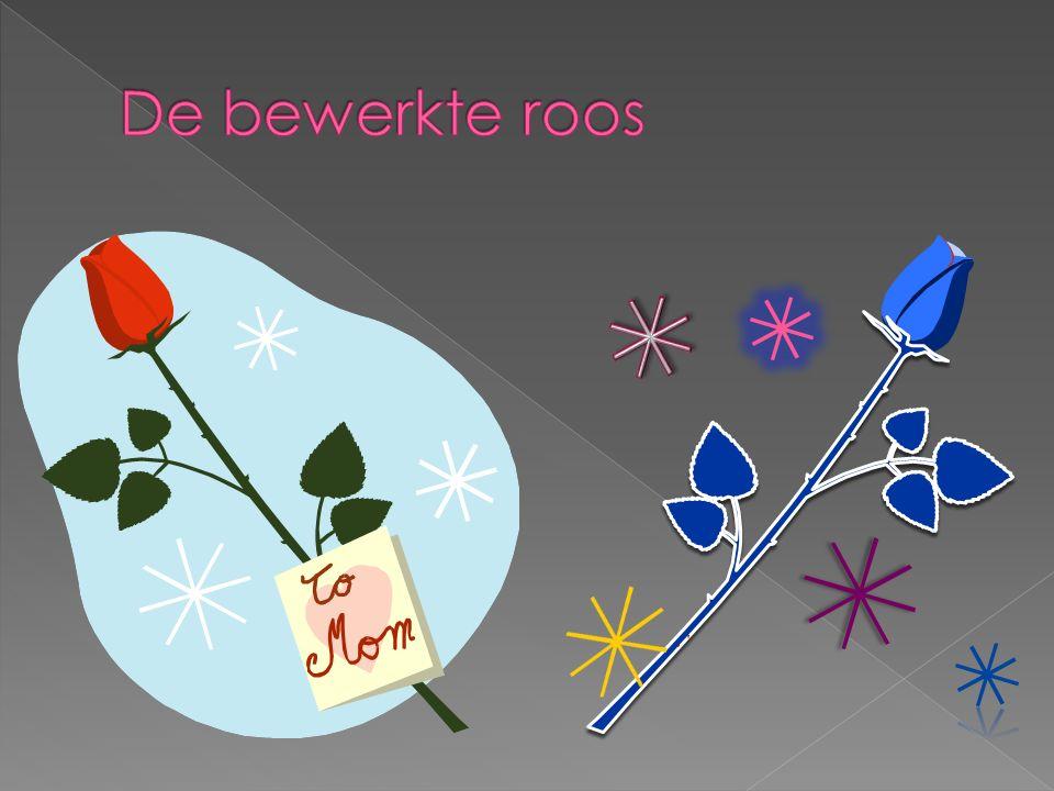 De bewerkte roos