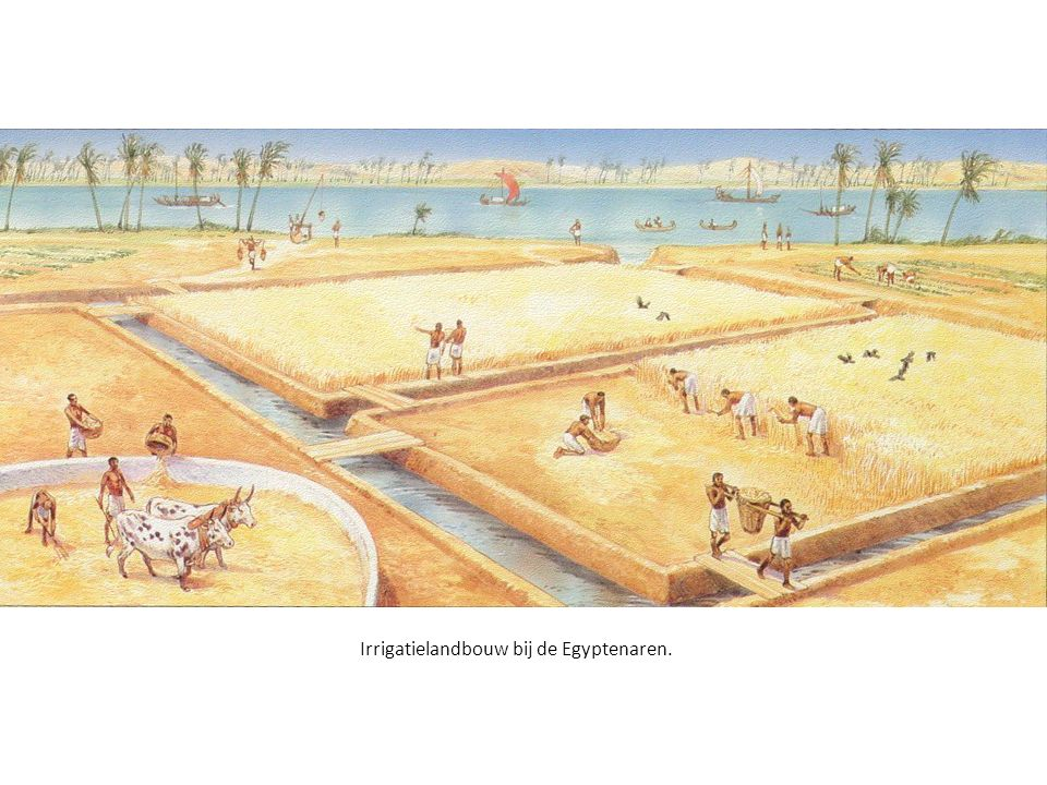 Irrigatielandbouw bij de Egyptenaren.