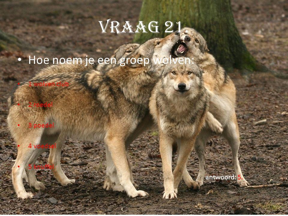 Vraag 21. Hoe noem je een groep wolven: 1 wolven club 2 roedel