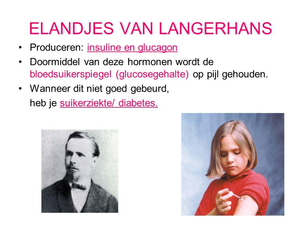 ELANDJES VAN LANGERHANS