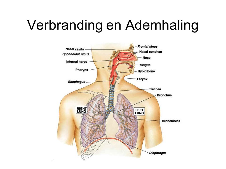 Verbranding en Ademhaling