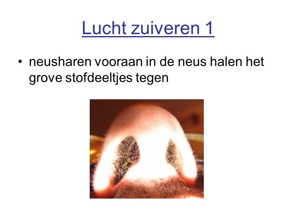 Lucht zuiveren 1 neusharen vooraan in de neus halen het grove stofdeeltjes tegen