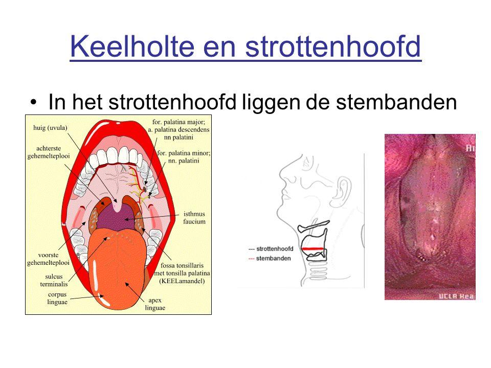 Keelholte en strottenhoofd