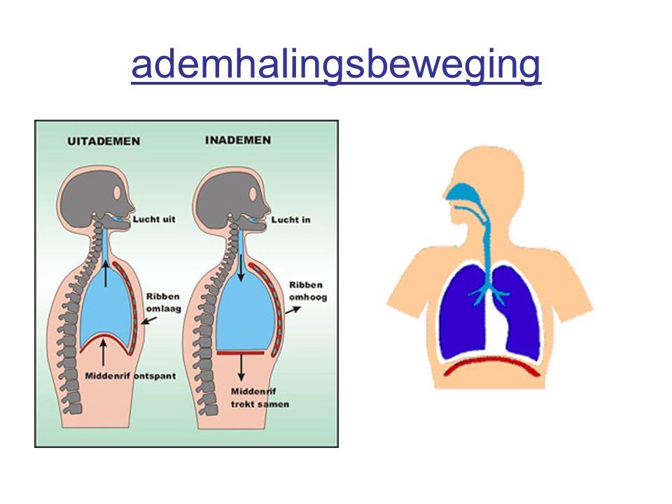 ademhalingsbeweging