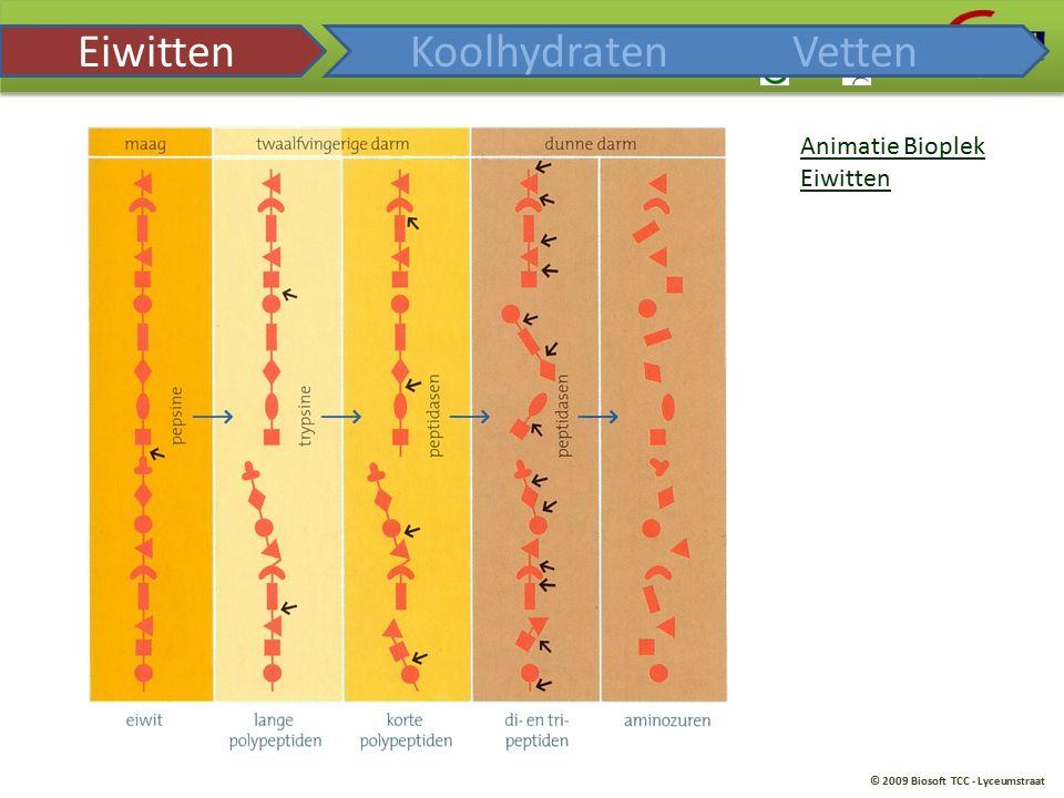 Eiwitten Koolhydraten Vetten Animatie Bioplek Eiwitten
