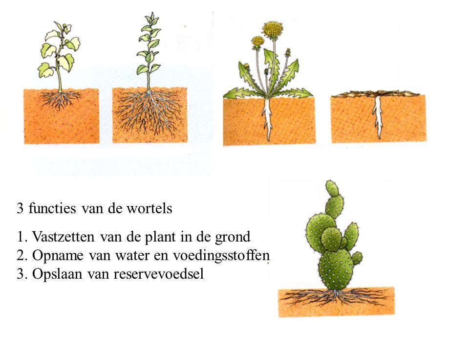 3 functies van de wortels