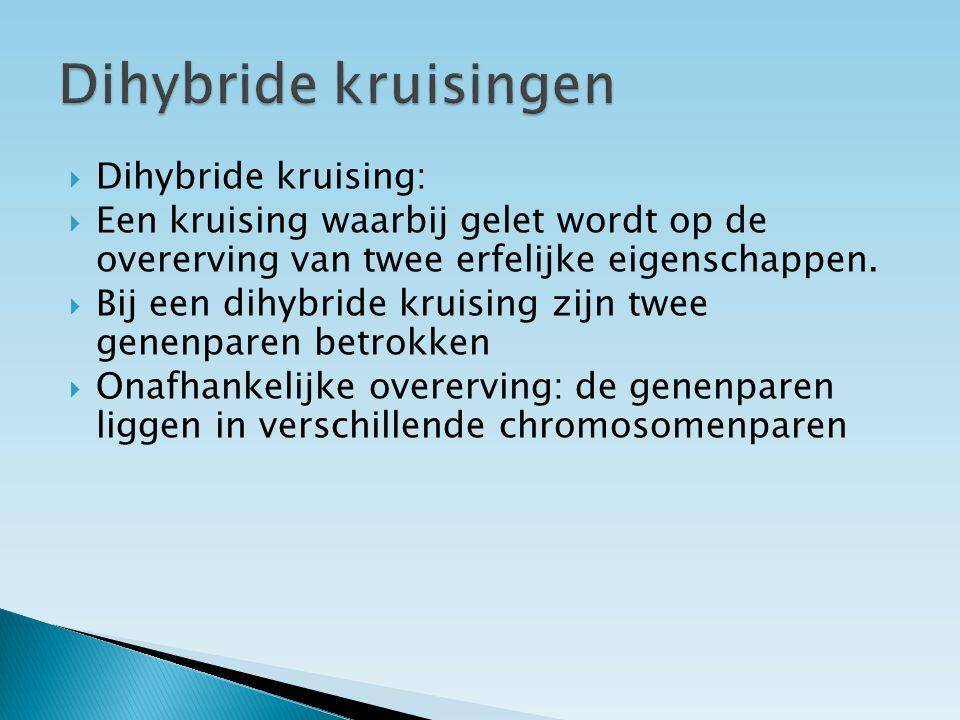Dihybride kruisingen Dihybride kruising: