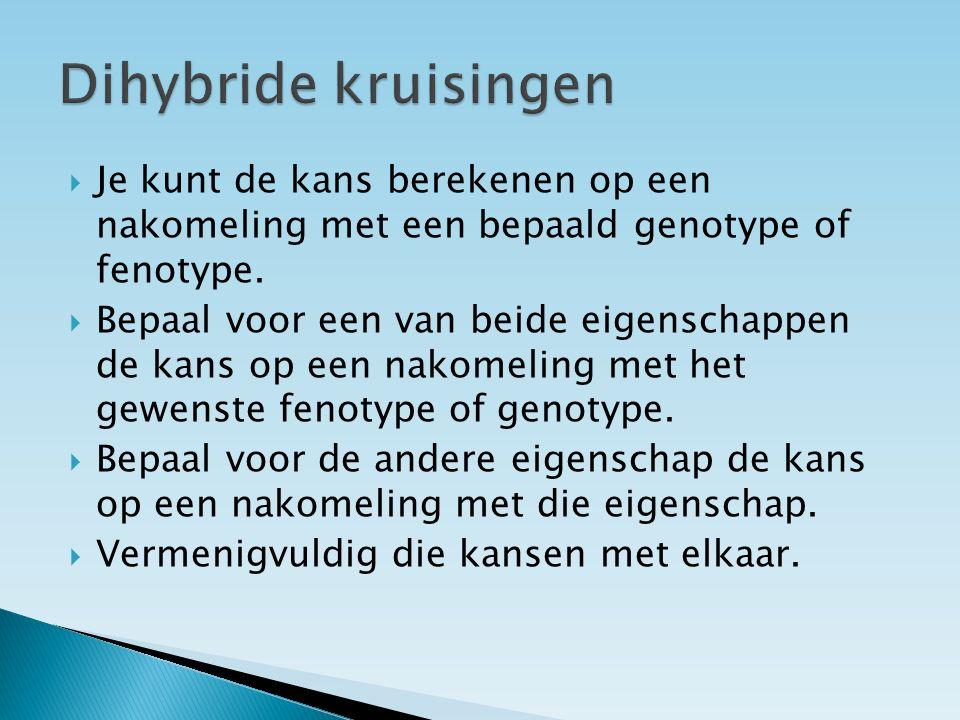 Dihybride kruisingen Je kunt de kans berekenen op een nakomeling met een bepaald genotype of fenotype.