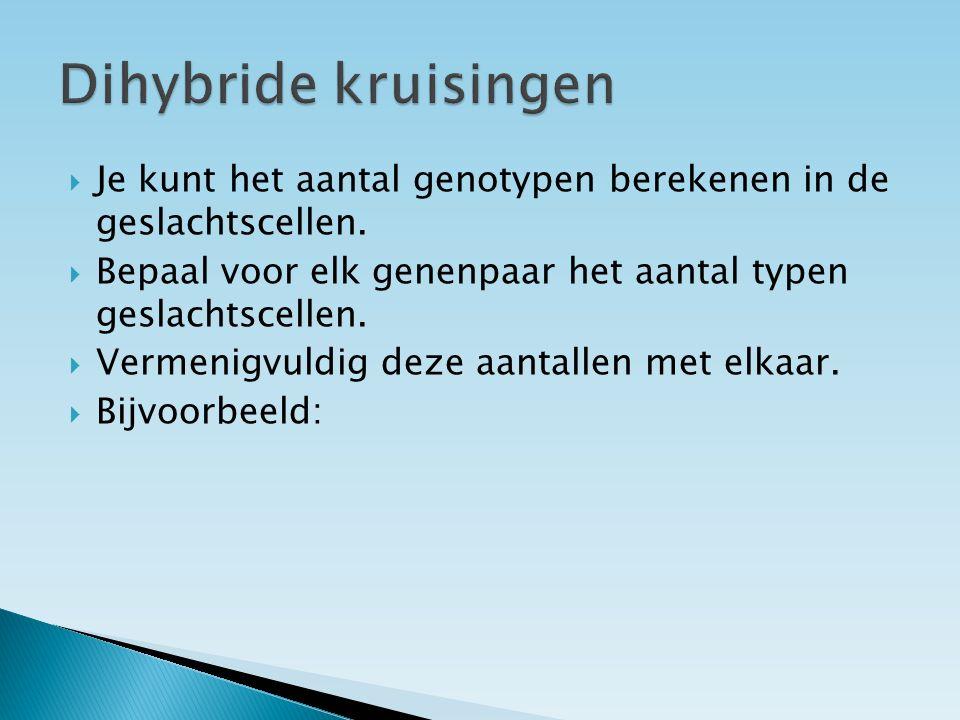 Dihybride kruisingen Je kunt het aantal genotypen berekenen in de geslachtscellen. Bepaal voor elk genenpaar het aantal typen geslachtscellen.