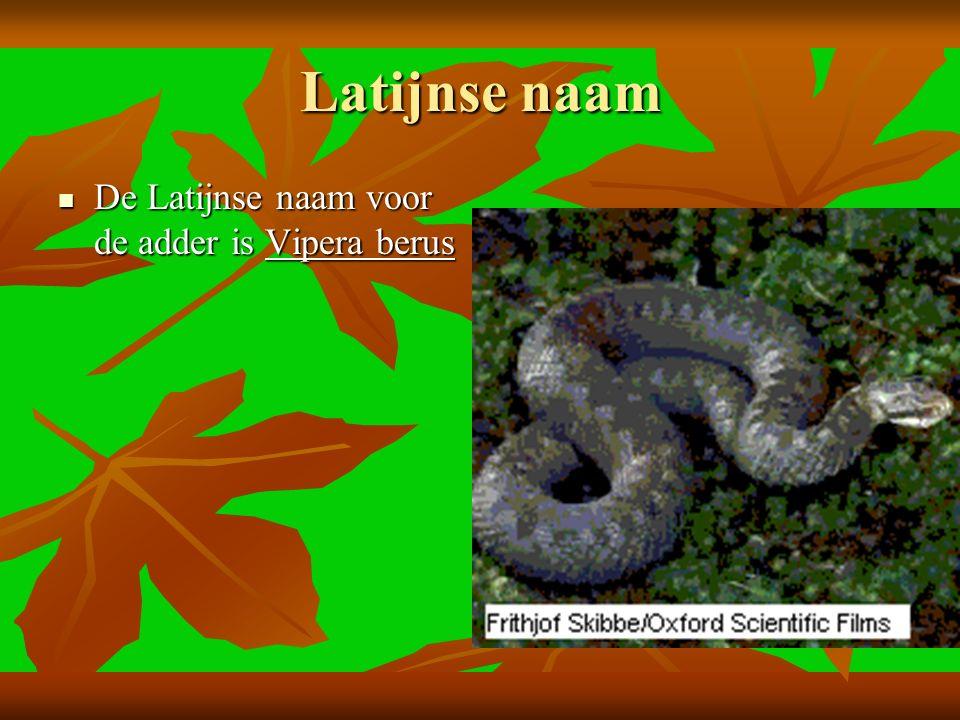 Latijnse naam De Latijnse naam voor de adder is Vipera berus