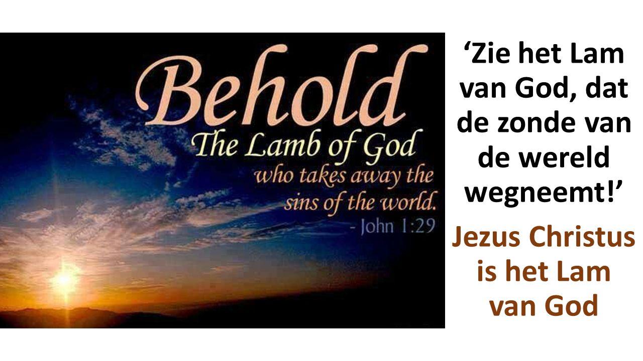 'Zie het Lam van God, dat de zonde van de wereld wegneemt