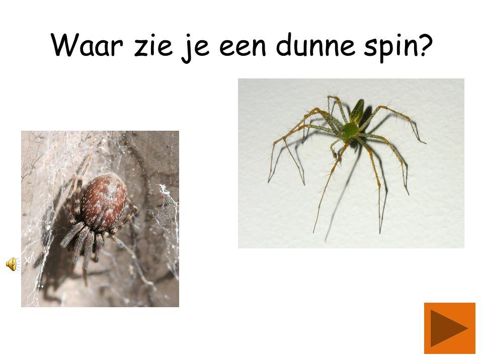 Waar zie je een dunne spin