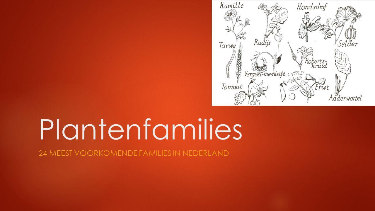 24 meest voorkomende families in nederland