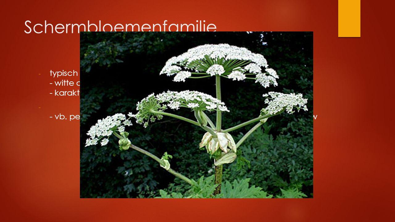 Schermbloemenfamilie
