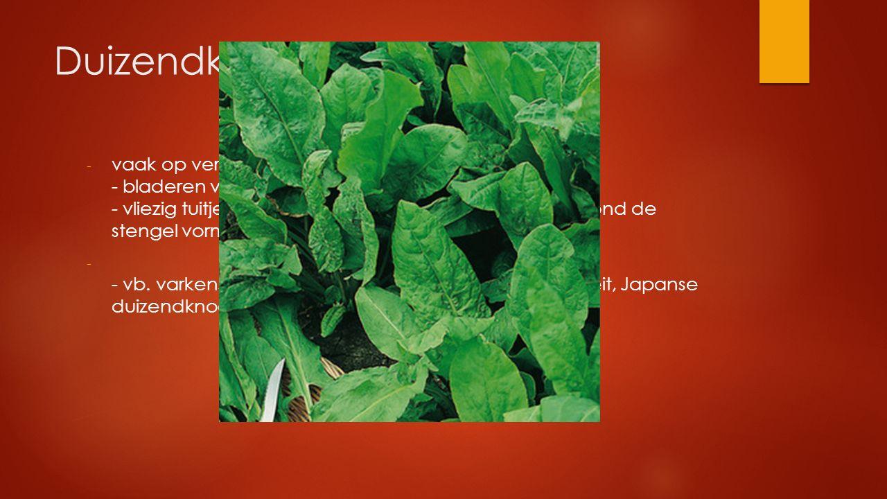Duizendknoopfamilie vaak op verstoorde plaatsen - bladeren verspreid - vliezig tuitje aan de voet van het blad dat een buis rond de stengel vormt.