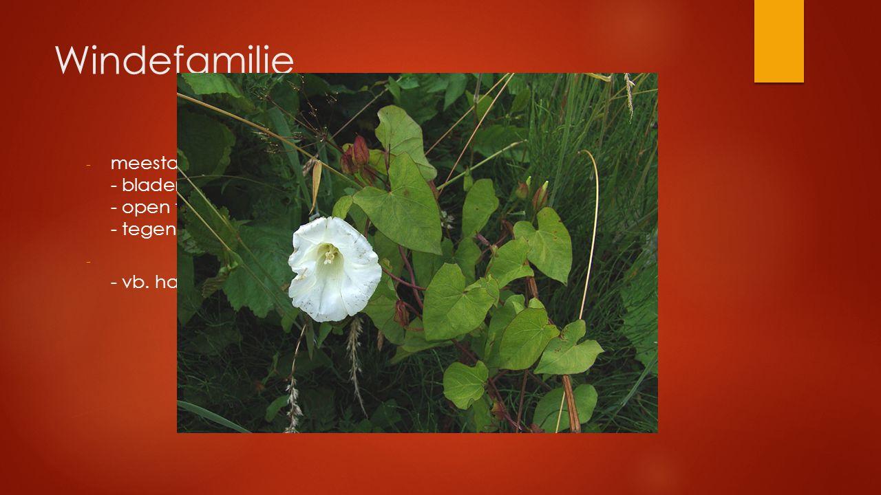 Windefamilie meestal klimplanten - bladeren verspreid - open trechtervormige bloemen (wit of roos) - tegen de klok inwindend.