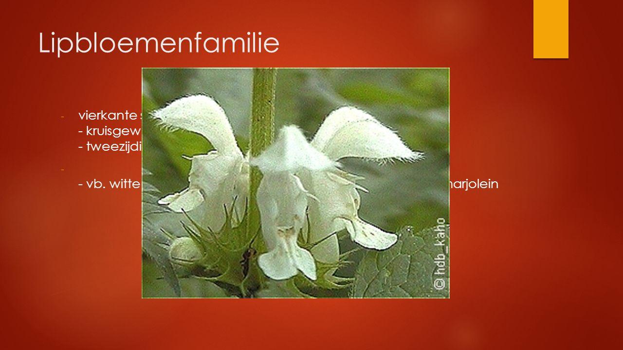 Lipbloemenfamilie vierkante stengel - kruisgewijs tegenoverst. bladstand - tweezijdige lipbloem met 2 korte en 2 lange meeldraden.