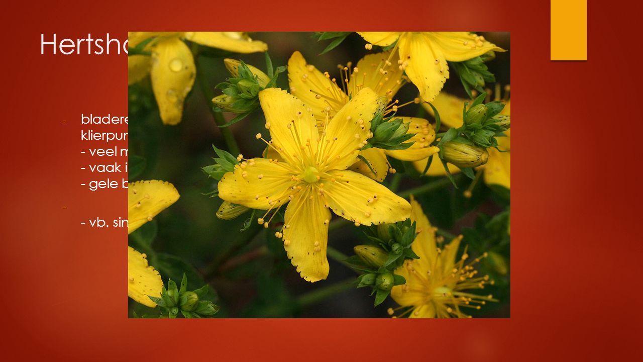 Hertshooifamilie bladeren tegenoverstaand, gaaf, vaak met doorschijnende klierpuntjes - veel meeldraden - vaak in bundels - gele bloemen.