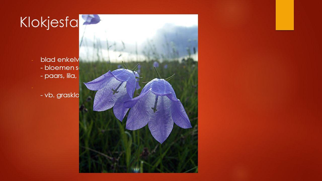Klokjesfamilie blad enkelvoudig verspreid - bloemen soms klok- of trechtervormig - paars, lila, roze bloem.