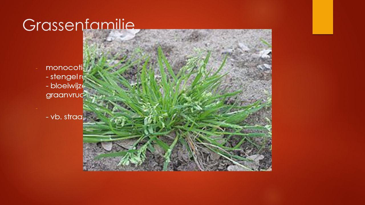 Grassenfamilie monocotiel : parallelnervig blad - stengel rond vliezig of harrig tongetje - bloeiwijze: aar graanvrucht.