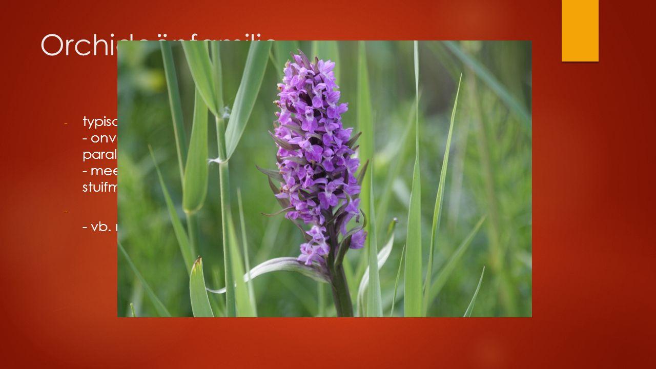 Orchideënfamilie