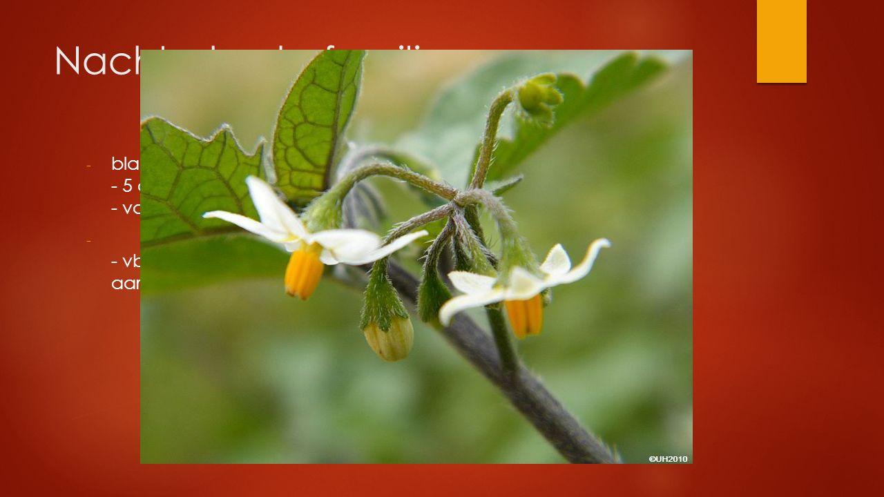 Nachtschade familie blad gesteeld en verspreid - 5 aan de voet vergroeide kroonbladeren - vaak giftig.