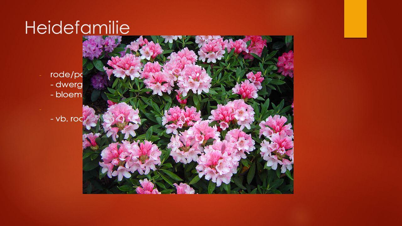 Heidefamilie rode/paarse bloemen - dwergstruiken met enkelvoudige bladeren - bloem klokvormig vergroeid.