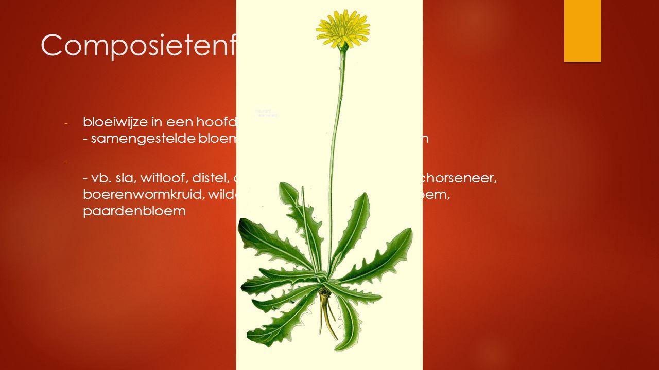 Composietenfamilie bloeiwijze in een hoofdje - samengestelde bloem met buis- en/of lintbloemen.