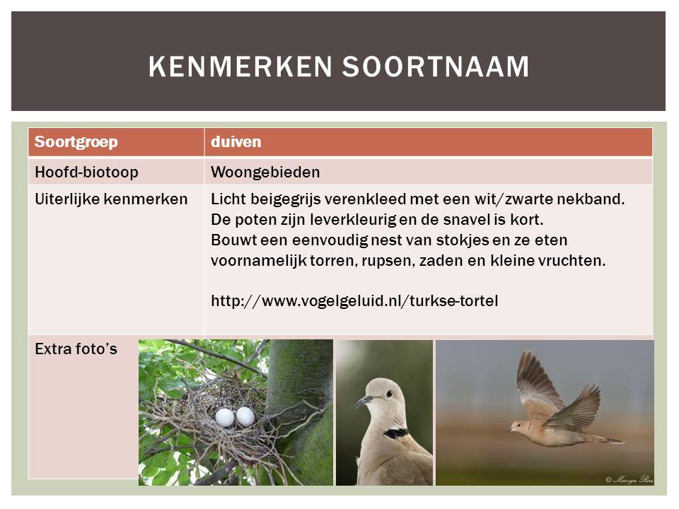 Kenmerken soortnaam Soortgroep duiven Hoofd-biotoop Woongebieden