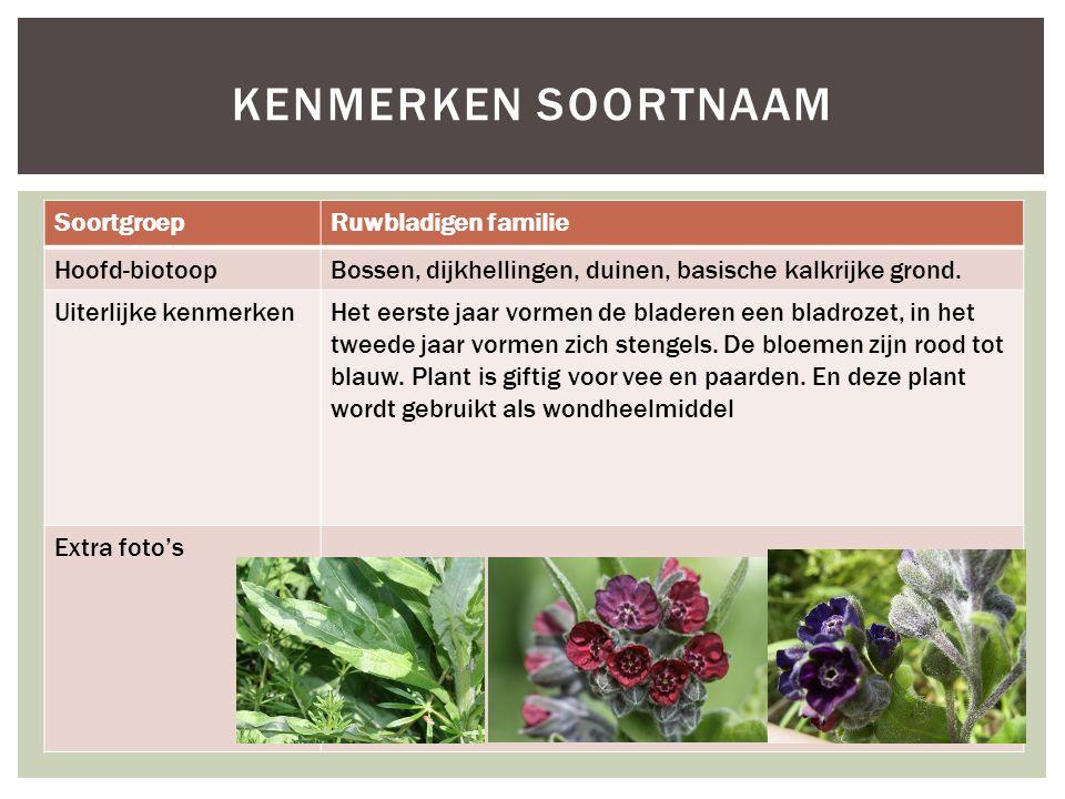 Kenmerken soortnaam Soortgroep Ruwbladigen familie Hoofd-biotoop